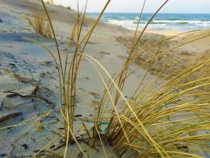 Smiltynės paplūdimiai - 19