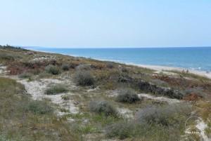 Smiltynės, Kuršių nerijos dviračių takai - 7