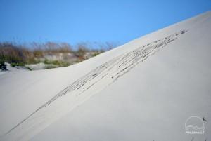 Smiltynės, Kuršių nerijos dviračių takai - 9